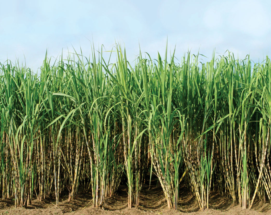 sugar industry N ramanathan, managing director, ponni sugars (erode) ltd, said the sugar  industry as a whole will be burdened with a shortfall of about.