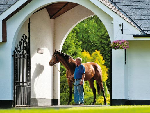 Irish National Stud: THE IRISH NATIONAL STUD Direct Link